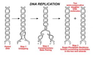 Gene expression and the D816V mutation - Mast Attack
