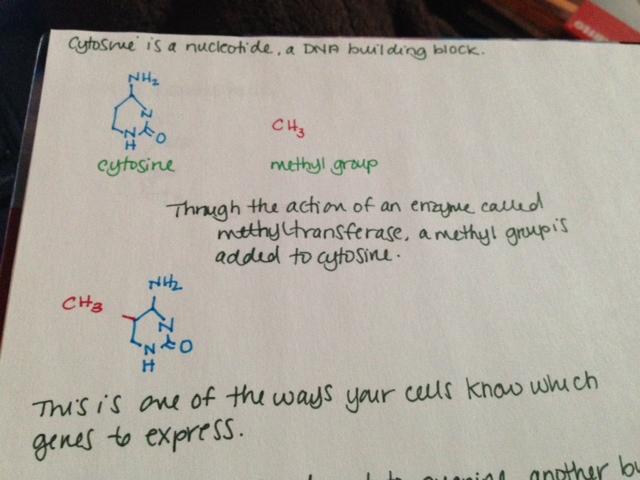Methylation 1